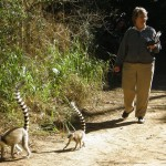 ICDS member Dr. Anne Millhollen during a study of foraging behavior of ring-tailed lemurs